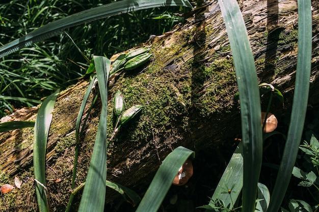 Atmosphère mystique d'automne dans un vieux fond de fantaisie de forêt avec de la mousse