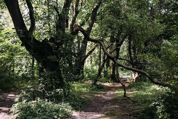 Atmosphère mystique dans le vieux fond de fantaisie de forêt avec la route et l'arbre cassé