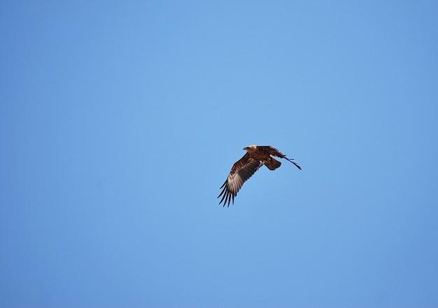 Attraper aigle en plein vol goa benaulim heureux plage