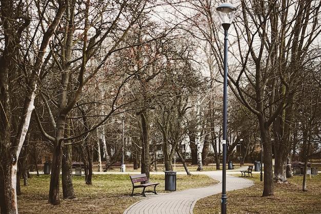 Au début du printemps ou de l'automne nature dans les feuilles d'automne du parc et les arbres à l'extérieur belle saison