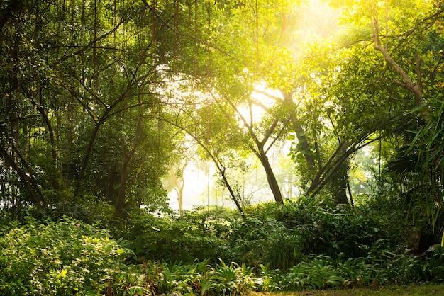 Aube d'automne en forêt