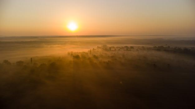 Aube lumineuse sur la forêt dans le brouillard
