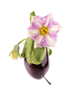 Aubergine à la fleur d'aubergine