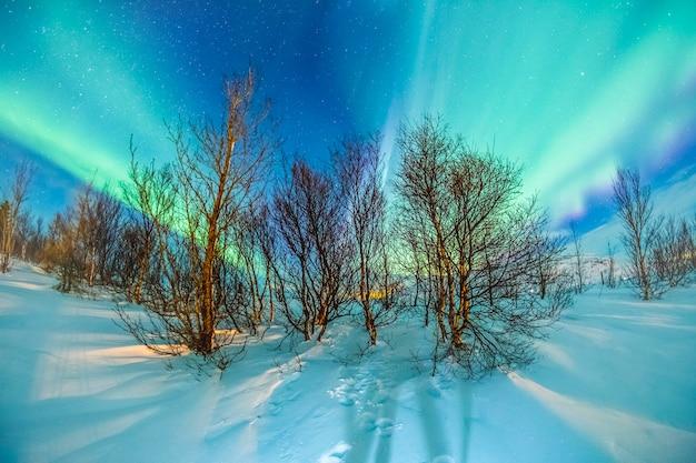 Aurores boréales sur neige et arbre