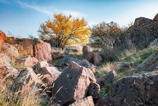 Automne belle végétation jaunie et pierres grises recouvertes de lichen multicolore et de mousse dans la nature des collines des carpates et de l'ukraine pittoresque