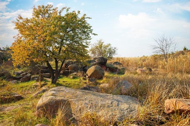 Automne belle végétation jaunie et pierres grises recouvertes de lichen multicolore et de mousse dans la nature des collines et de l'ukraine pittoresque