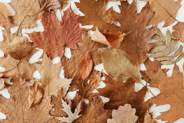 Automne, composition d'automne. belle de feuilles séchées marron, orange, beige