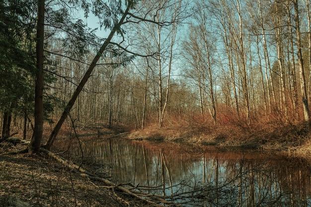L'automne dans une belle forêt