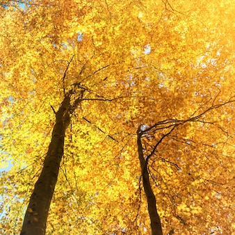 Automne dans la forêt. paysage naturel avec des arbres et des feuilles rouges, oranges, jaunes