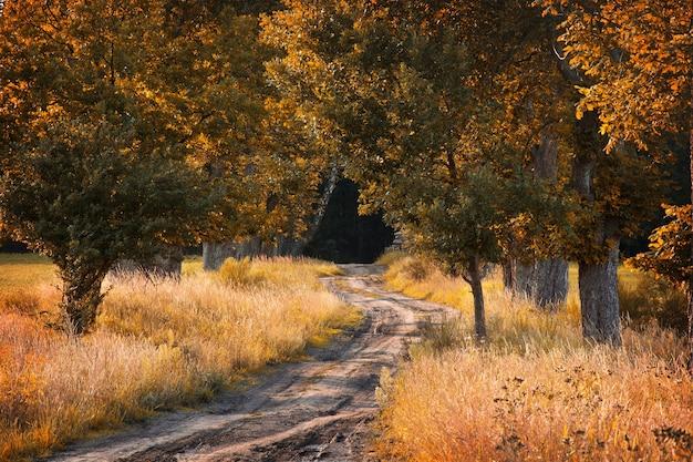 L'automne dans la forêt.