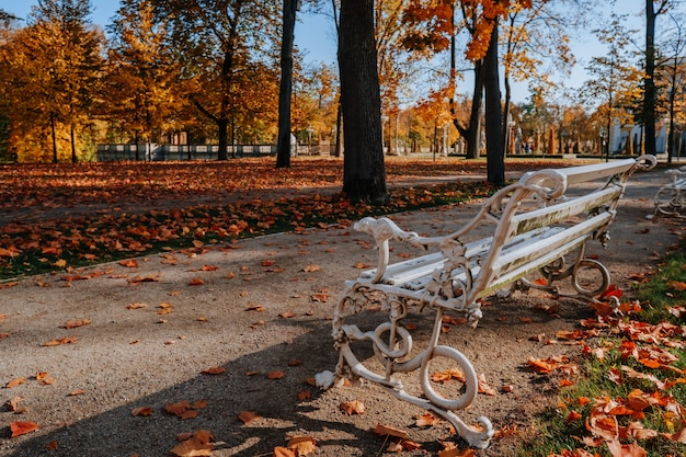 L'automne dans le magnifique parc