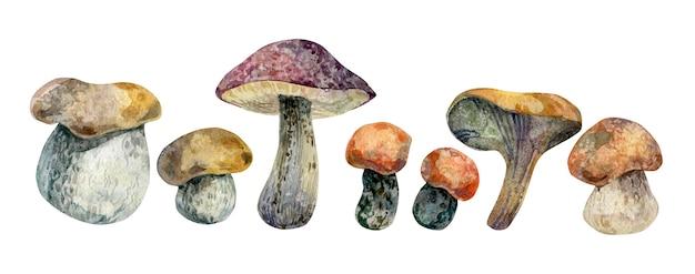 Automne dessiné à la main à l'aquarelle sertie de champignons comestibles isolés sur fond blanc forêt