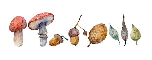 Automne dessiné à la main à l'aquarelle sertie de champignons non comestibles isolés sur l'agaric de mouche de fond blanc