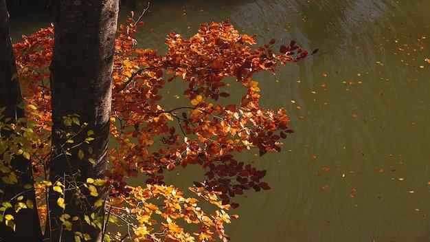 Automne doré automne feuilles jaunes et rouges sur le fond d'un lac avec des feuilles mortes fond avec espace copie