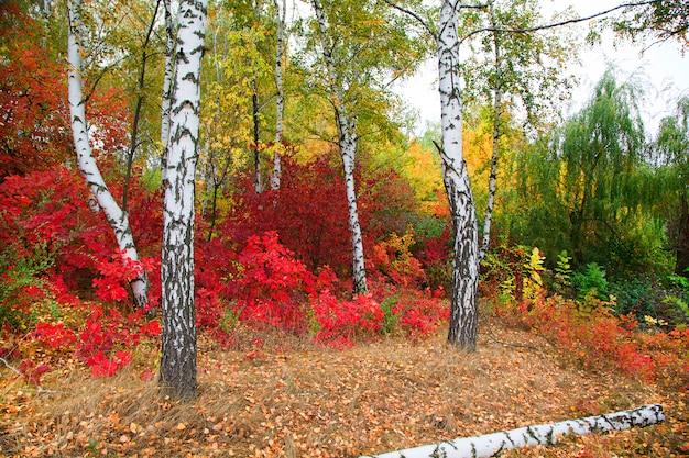 Automne doré, beau paysage d'automne, arbres rouge, jaune et vert vif