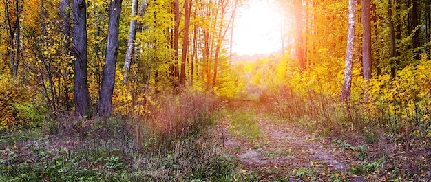 Automne doré dans la forêt. forêt d'automne avec des arbres colorés et une route au coucher du soleil