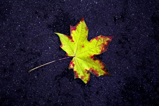 Automne doré. feuilles d'érable multicolores reposent sur le sol