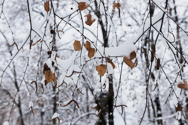 Automne, feuilles, couvert, neige