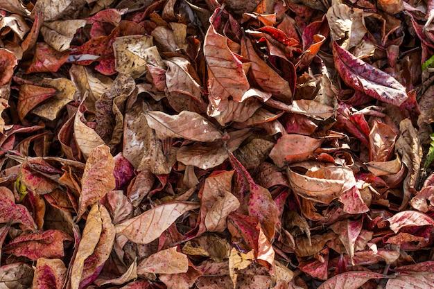 Automne feuilles fond