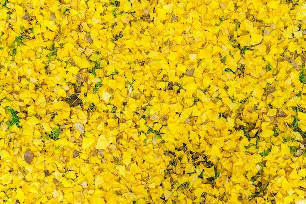 Automne feuilles jaunes sur source fraîche herbe verte