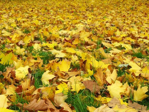 L'automne. feuilles sur le sol