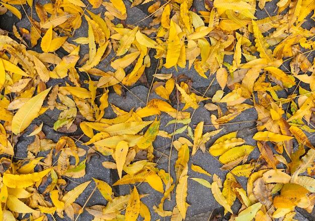 Automne feuilles tombées fond