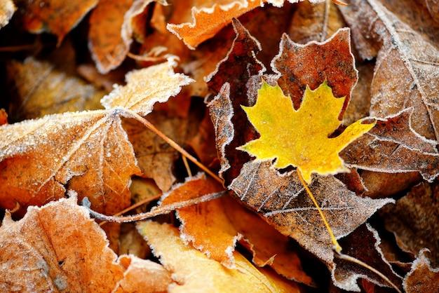Automne gelé naturel bouchent les feuilles colorées rouge, vert et jaune.
