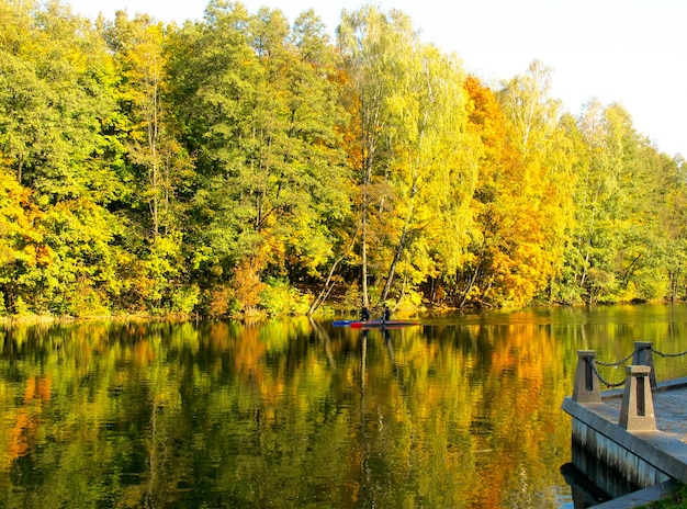 Automne d'or sur la réflexion de lac dans l'eau du feuillage jaune des canoës lumineux d'arbres sur le