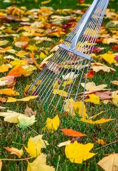 Automne récolte des feuilles jaunes tombées dans le parc en automne.
