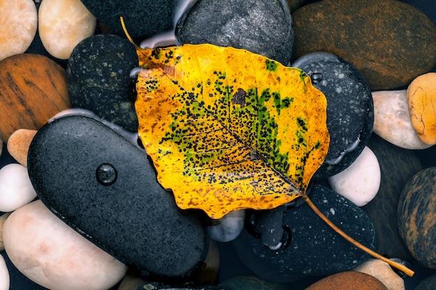 L'automne et le zen comme les concepts orange partent sur la pierre de la rivière.