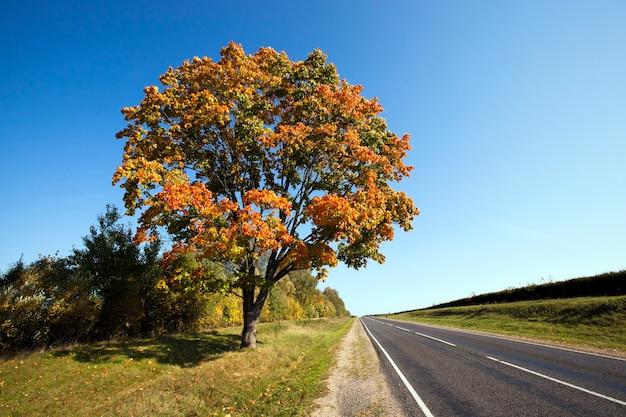 L'autoroute asphaltée dans une saison d'automne. biélorussie