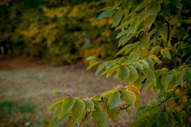 Autumm congé et nature floue. feuillage coloré dans le parc. chute des feuilles naturelles. saison d'automne