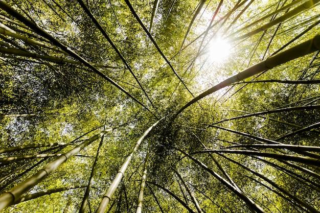 Auvent de grandes bambous