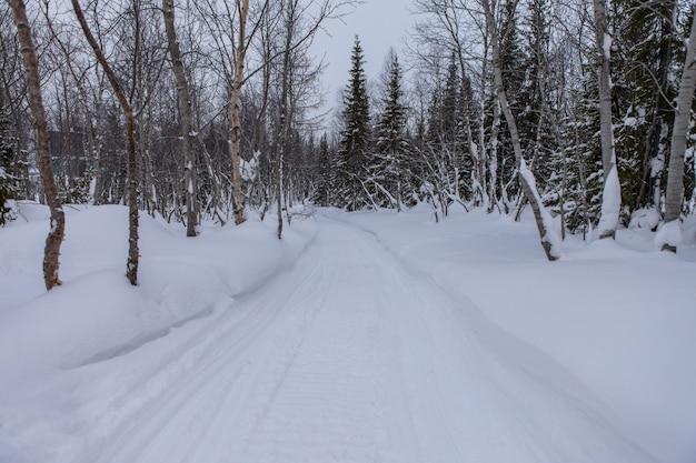 Avenue dans le parc d'hiver avec de beaux arbres couverts de neige.