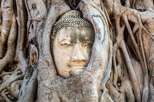 Ayutthaya tête de statue de bouddha dans les racines des arbres