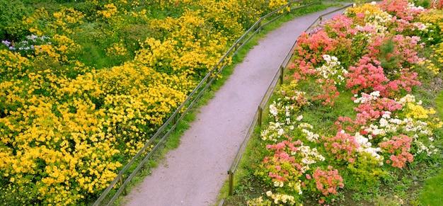 Les azalées fleurissent sur un parterre de fleurs dans le parc. fleurs printanières multicolores.