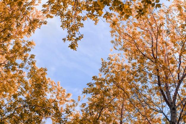 Bacground de printemps. les branches forment un motif en forme de cœur