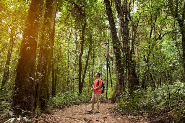 Backpacker admirant la forêt