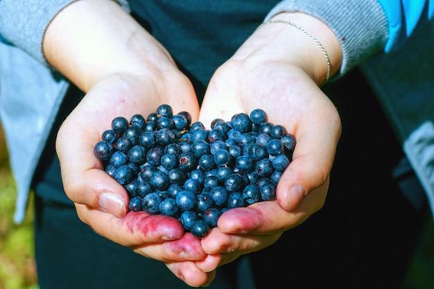 Baies de bleuets sauvages dans les mains agrandi en forme de coeur.
