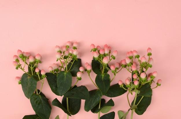 Baies sur fond rose