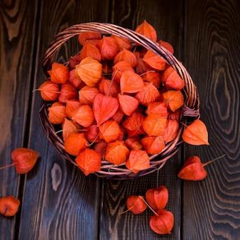 Baies de physalis orange vif sur un fond boisé brun