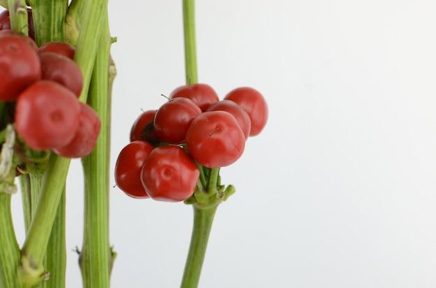Les baies rouges isolent sur fond blanc