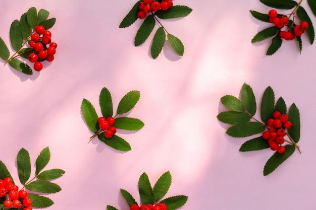 Baies rouges de rowan sur table. sorbier de baies mûres sur table, composition automnale.