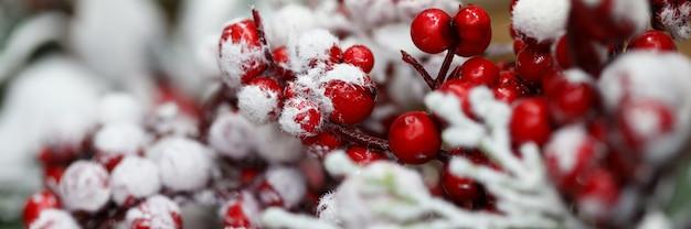 Les baies rouges sont couvertes de neige en hiver
