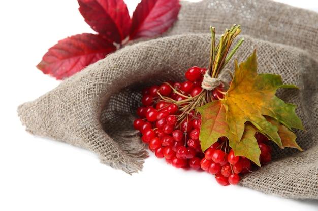 Baies rouges de viorne sur une serviette en sac, isolated on white