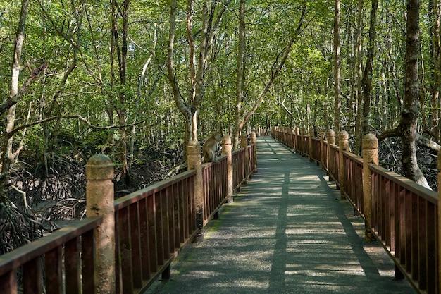 Balade dans la forêt de mangrove en asie.