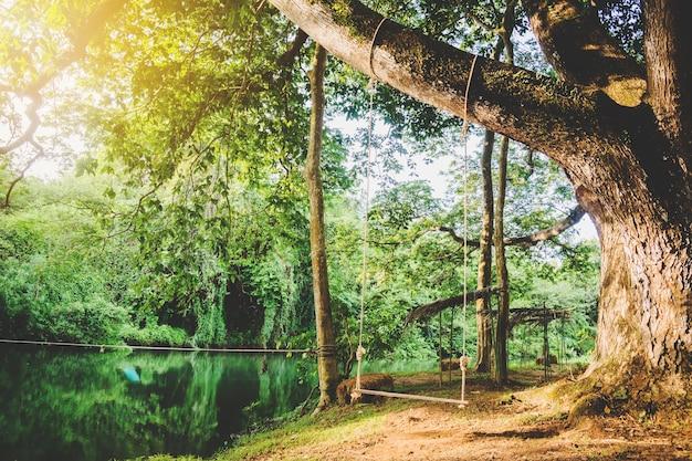 Balancer à côté du canal sous le grand arbre