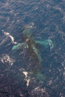 Baleine à bosse nageant dans l'eau de mer d'un bleu profond - vue aérienne