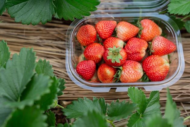 Balle de fraise dans la boîte.
