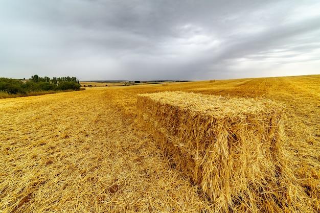 Balle de paille dans le champ après la récolte avec des tons jaunes et un ciel avec des nuages sombres.